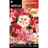 Graines de godétia fleur double d'azalée variée
