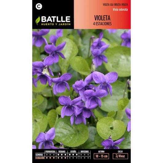 Semillas de  Violeta 4 estaciones