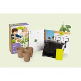 Kit di coltivazione infantile mini Salvia Sembra