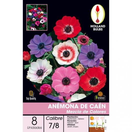 Bulbo di Anemone Caen Mix 8 unità