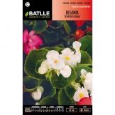 Semi di Begonia Semperflorens