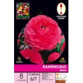 Bulbe de renoncule rose 8 pièces