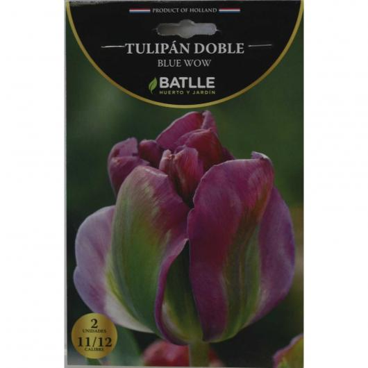 Bulbo Tulipán doble Blue Wow 2ud