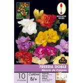 Bulbo di Fresia Doppio Mix di colori 10 unità