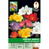 Bulbo di Fresia Simple Mix di colori 10 unità