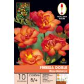 Red-Orange Double Freesia bulbs 10pcs