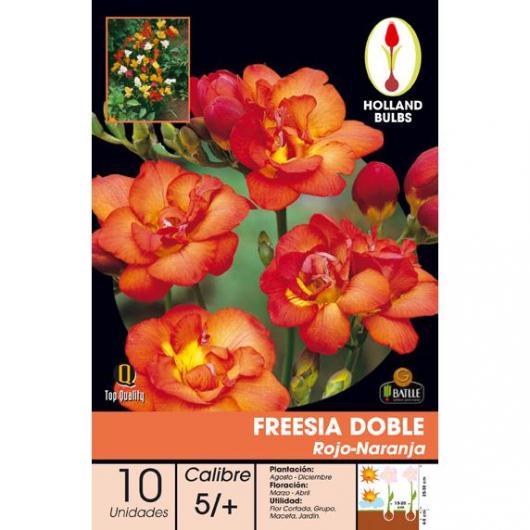 Bulbo di Fresia Doppia Rossa-Arancione 10 unità