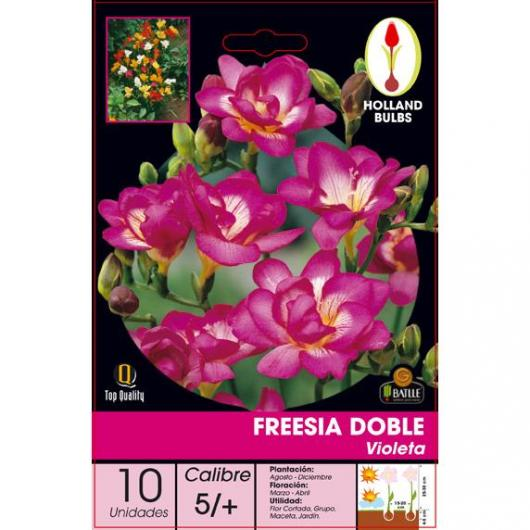 Bulbe de freesia double violet 10 pièces