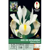 Bolbo Iris Holanda branco puro 10 ud
