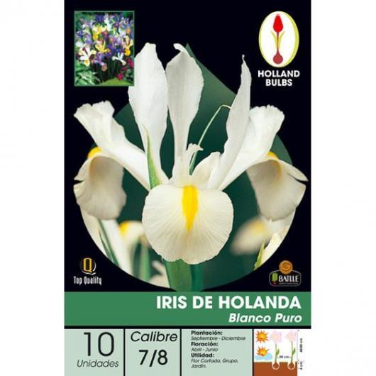 Bulbe d'iris de Hollande blanc pur 10 pièces