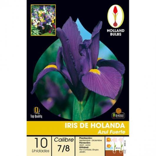 Bulbo Iris Holanda Azul fuerte 10ud
