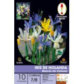 Bulbe d'iris de Hollande Mélange de couleurs 10 pièces