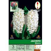 Bolbo jacinto branco, 3 ud
