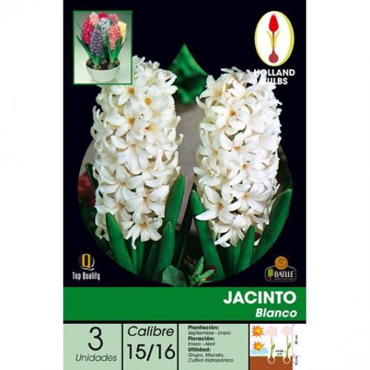 Bulbe de jacinthe blanche 3 pièces
