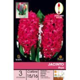 Bolbo Jacinto vermelho, 3 ud