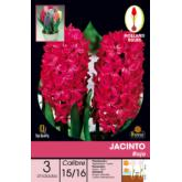 Bulbo Jacinto Rojo 3ud