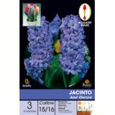 Bolbo Jacinto azul escuro 3 ud