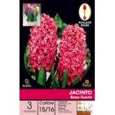 Bolbo Jacinto rosa forte, 3 ud