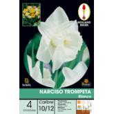 Bulbo di Narciso tromba bianco 4 unità