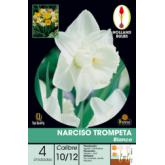 Bolbo Narciso trompete branco 4 ud