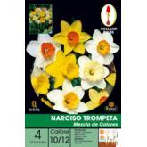 Narciso Bolbo Tromp. Mistura de cores 4UD