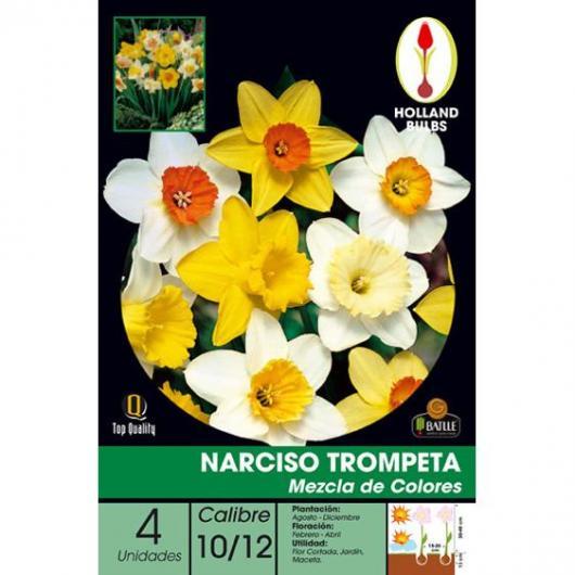 Bulbo di Narciso tromba mix di colori 4 unità