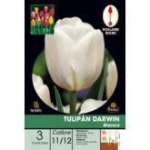 Bolbo de tulipa Darwin Branco 3 unidades