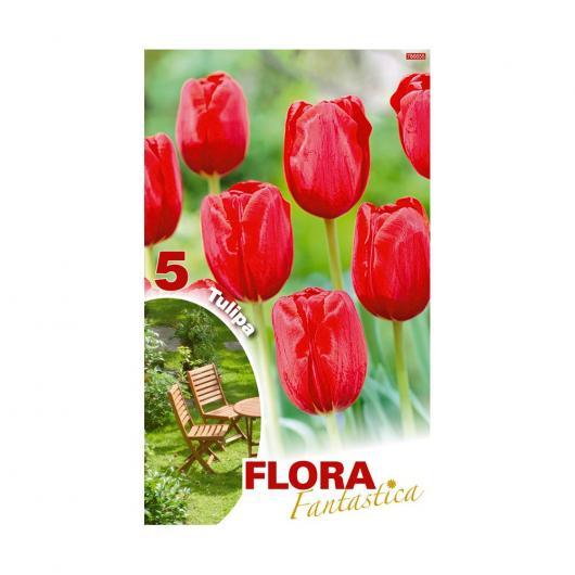 Bulbo Tulipán Darwin Rojo 3ud