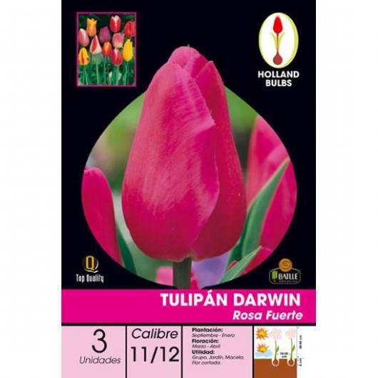 Bulbo di Tulipano Darwin Rosa Forte 3 unità