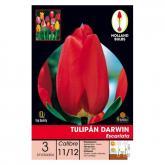 Bulbo di Tulipano Darwin Scarlatto 3 unità