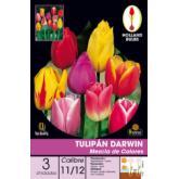 Bulbo Tulipán Darwin Mezcla colores 3ud