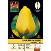 Bolbo Tulipa Darwin Amarelo ouro 3 ud