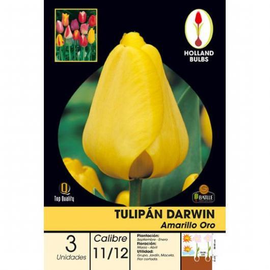 Bulbo di Tulipano Darwin Giallo oro 3 unità