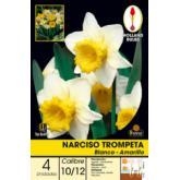 Bulbe de narcisse trompette blanc-jaune 4 pièces