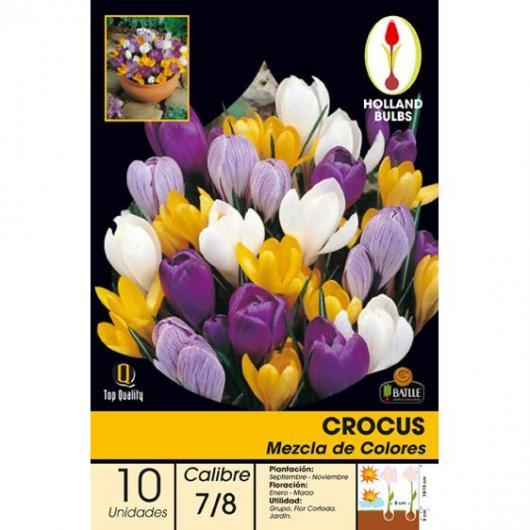 Bulbo Crocus Mezcla de colores 10ud