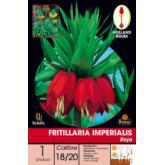 Bolbo Fritilllaria Imperialis vermelha, 1 ud