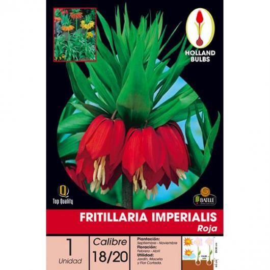 Bulbo di Fritillaria Imperialis rossa 1 unità