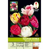 Bolbo Tulipa dupla mistura de cores, 3 ud