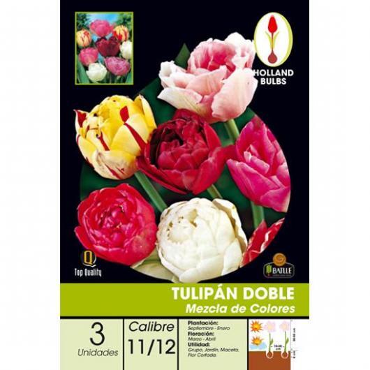 Bulbe de tulipe double Mélange de couleurs 3 pièces