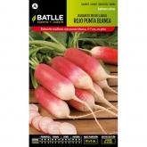 Graines de radis moyen large rouge à pointe blanche