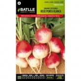 Graines de radis rond rouge à pointe blanche