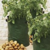Plantador de pátio para batatas Haxnicks, 3 ud
