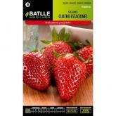 Graines de fraise 4 saisons
