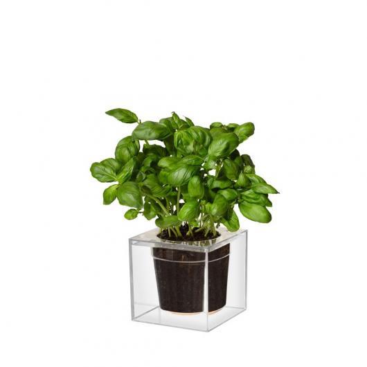Petit pot de fleurs transparent Boskke CUBE