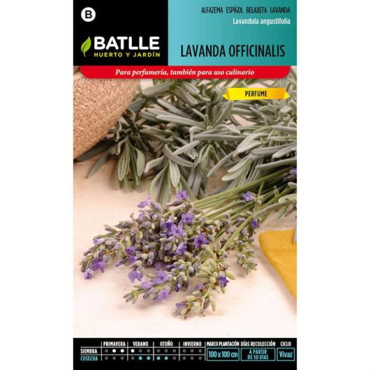 Graines de lavande officinale