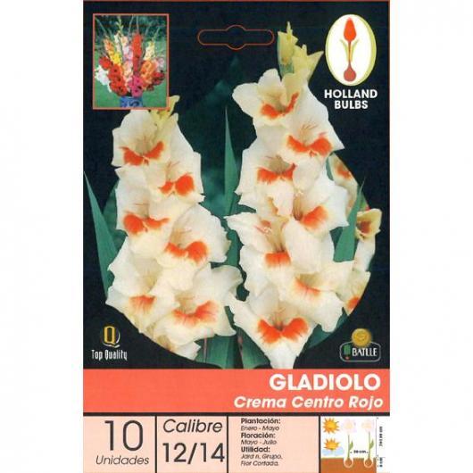 Bulbo di Gladiolo Crema centro Rosso 10 unità