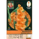 Bulbo di Gladiolo Arancione Salmone 10 unità