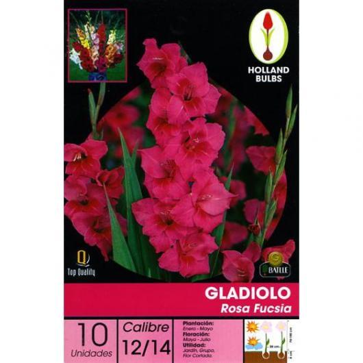 Bulbe de glaïeul rose fuchsia 10 pièces