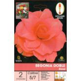 Bulbe de bégonia double rose 2 pièces