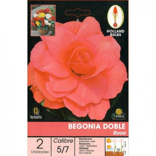 Bulbo di Begonia Doppia Rosa 2 unità